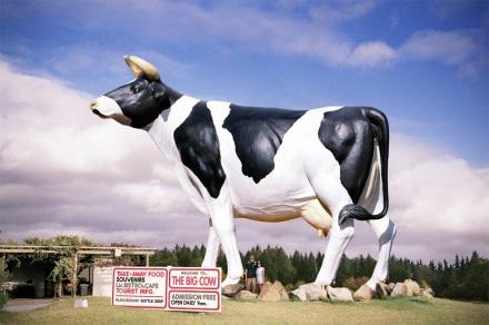 Big Cow 7_facebook